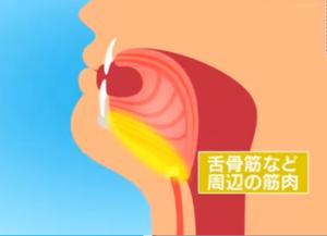 舌のエクササイズ・舌骨筋