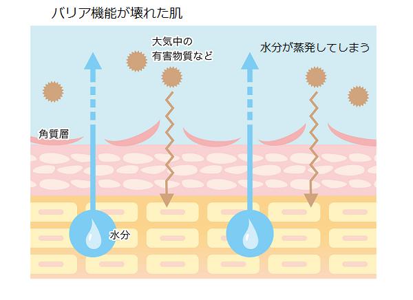 バリア機能が壊れた肌の図